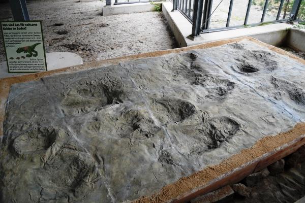 Dinosaurier Spuren